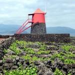 ピコ島のブドウ畑 / Landscape of the Pico Island