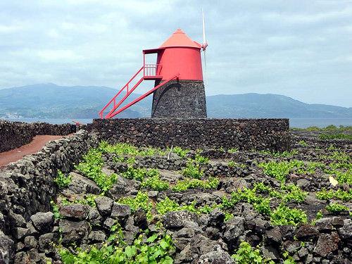 ピコ島の画像 p1_30