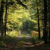 ビャウォヴィエジャの森(ベラヴェシュスカヤ・プーシャ / ビャウォヴィエジャの原生林) / Belovezhskaya Pushcha / Białowieża Forest